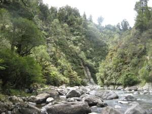 Wanganui 49
