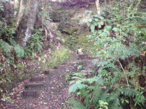 over 30 steps on TRB track to Boulder Reach